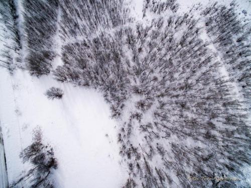 Skog fra oven-060417